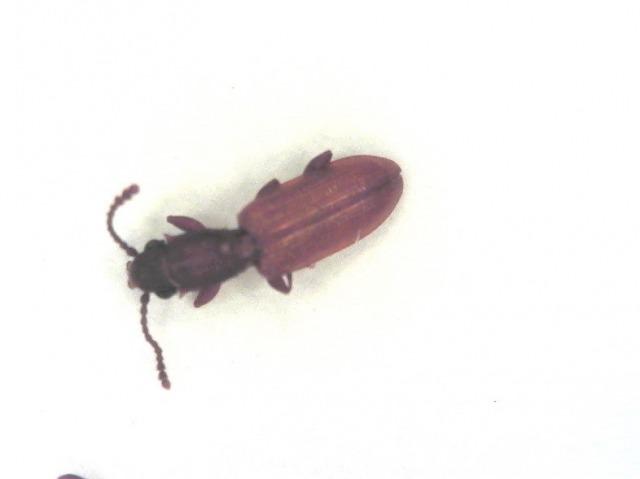 木材に付着した昆虫