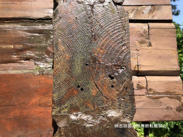 静岡県伊東市での虫孔被害の調査