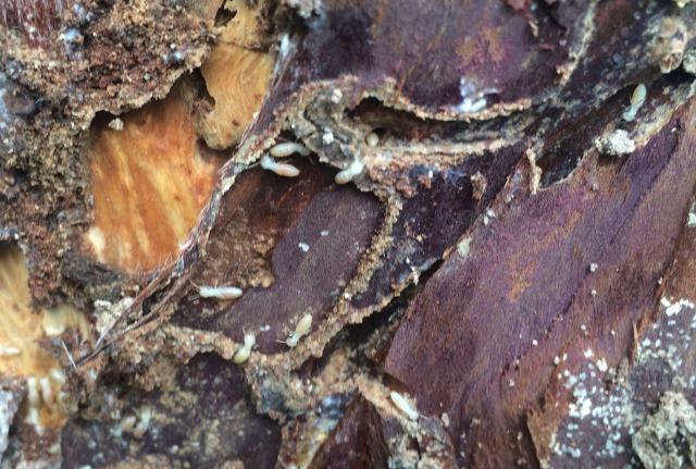 千葉県富里市でのシロアリ被害